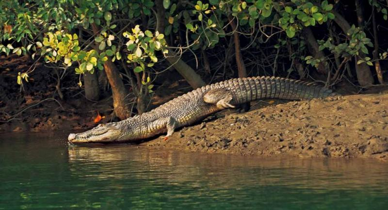 Sundarban Jungal Safari Tour