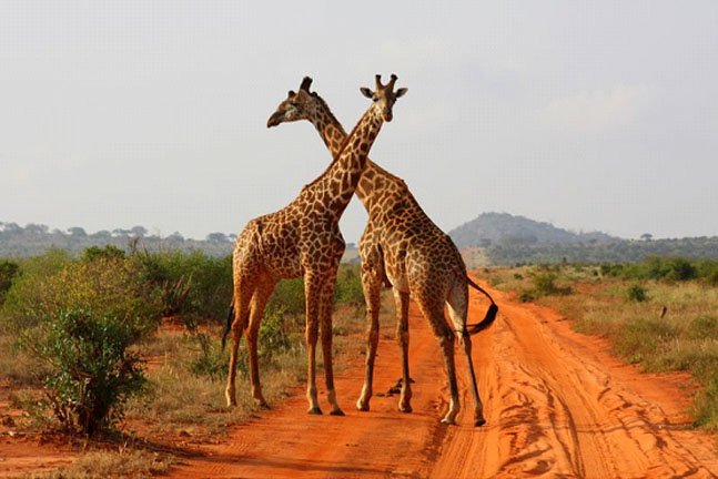 Explore Kenya Safari Tour