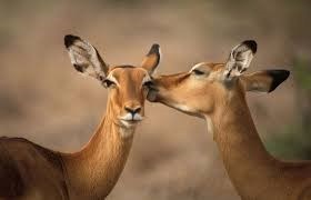The Greater Samburu Tour