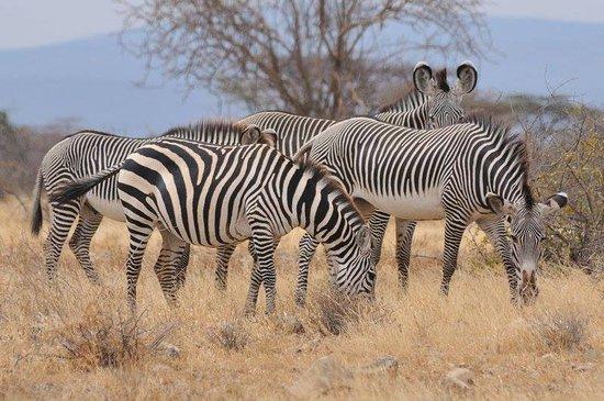 Kenya Wildlife Family Safari Tour