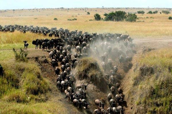 Kenya Migration Classic Safari