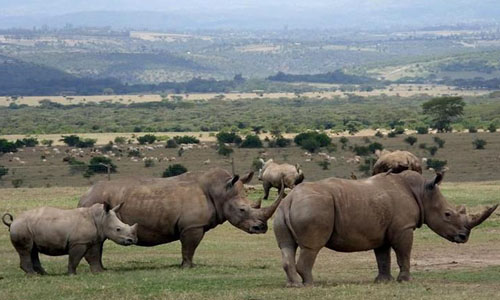 Vibrant Kenya Safari Tour
