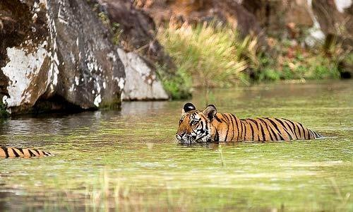 Nagarhole & Bandipur Tour Package