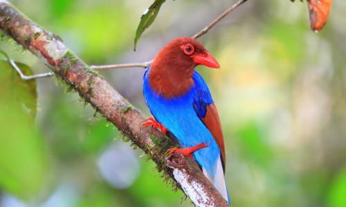 Bird Watching In Sri Lanka Package