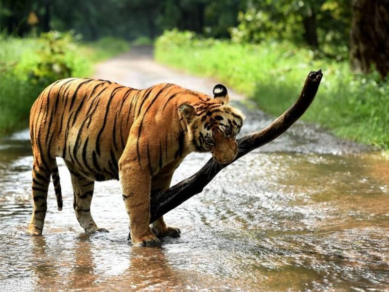 Anandwan-Hemalkasa-Somnath-Tadoba Tour