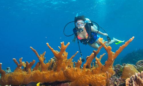 Andaman With Scuba Dive Tour