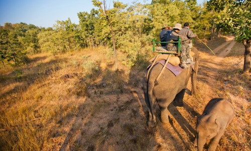Satpura National Park Package