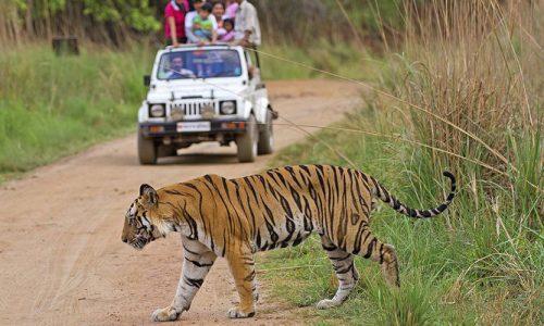 Jabalpur To Bandhavgarh Tour Package