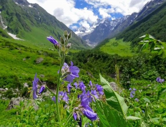 Valley Of Flowers Trek Tour
