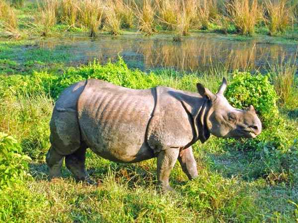 Explore Rhino And Royal Bengal Tiger Tour