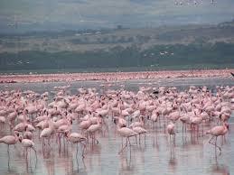 10 Days Bird Watching Safari In Kenya Tour