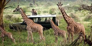 4 Days Budget Safari In Maasai Mara And Lake Nakuru National Park, Kenya