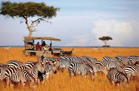 5 Days Wildebeest Migration Safari In Kenya