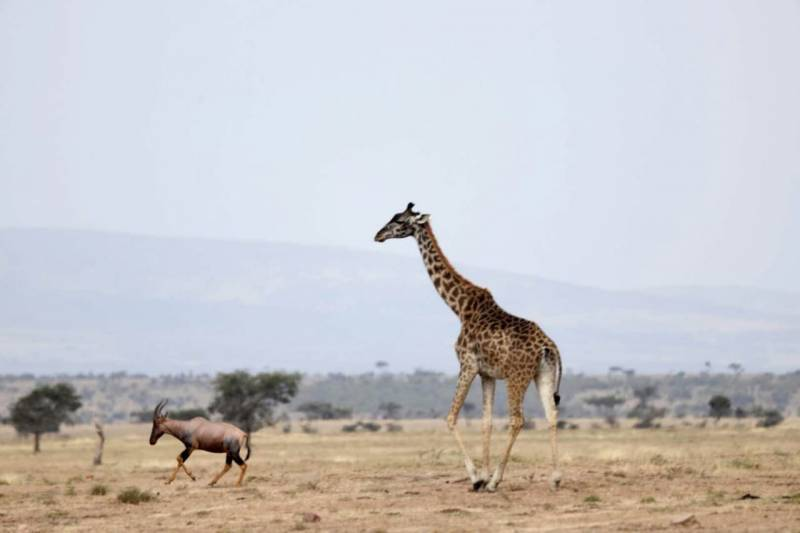 9 Days Most Beautiful Parks Safari In Kenya Tour