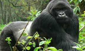 8 Days-queen Elizabeth & Bwindi National Park Safari