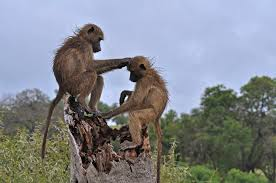 8 Days Tanzania Lodge Safaris Tour