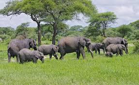 7 Days Tanzania Camping Safari Tour
