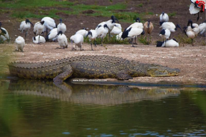 Nairobi National Park, David Sheldrick Wildlife Trust, Giraffe Center And Karen Blixen Museum Day