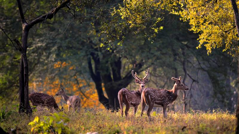 Jabalpur With  Kanha Tour