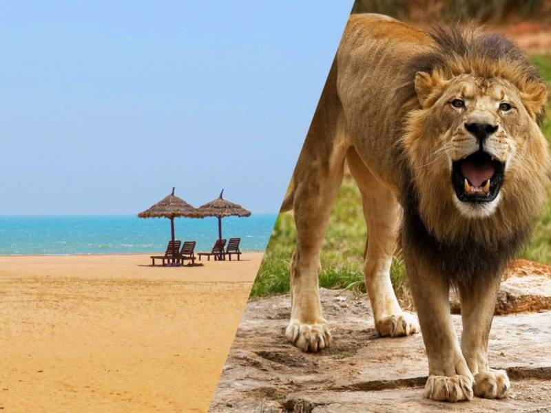 Wildlife And Beach Tour Packages