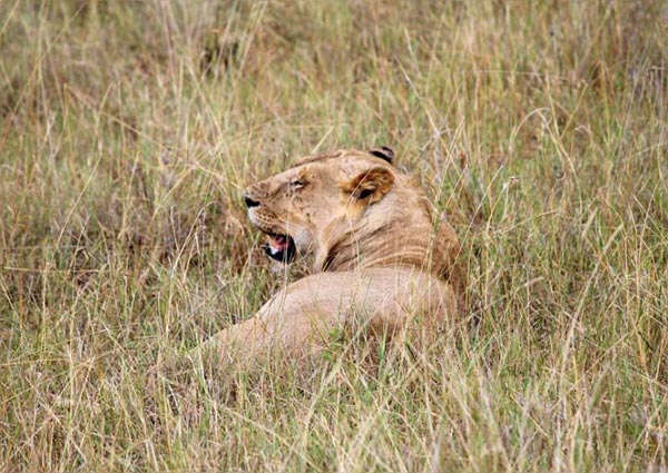 3 Days Masai Mara Tour