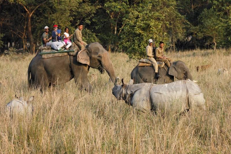 NE Pobitora Wild Life Sanctuary Tour