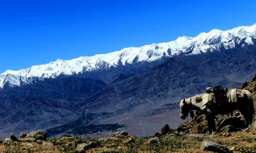 Markha Valley Trek Tour 14 Days