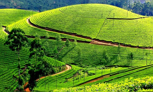 Munnar - Alleppey Houseboat Tour