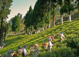 Gangtok And Darjeeling Tour 7 Days