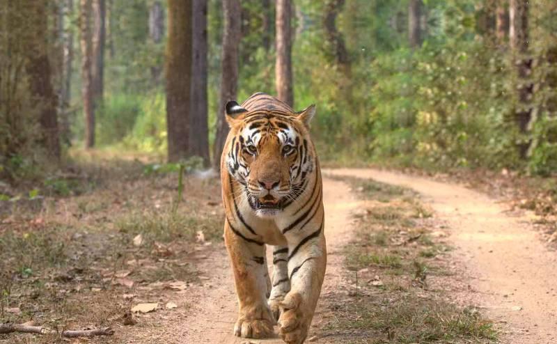 Day Visit Jungle Safari Tour