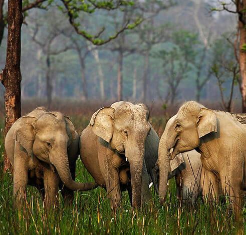 Assam Wildlife Tour 7 Days