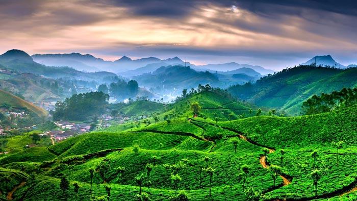 Kerala Munnar Tour