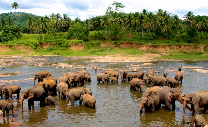 Srilanka Package Nature Special  8 Days