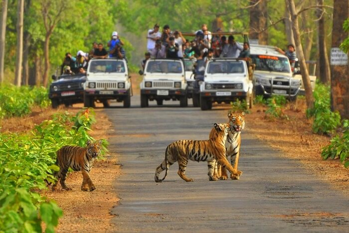 Ranthambore With Jaipur Tour