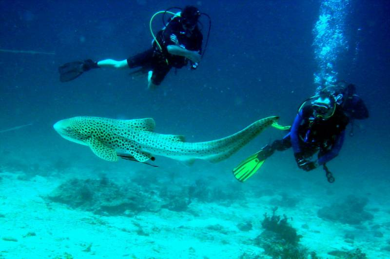 Andaman With Scuba Dive 04 Days
