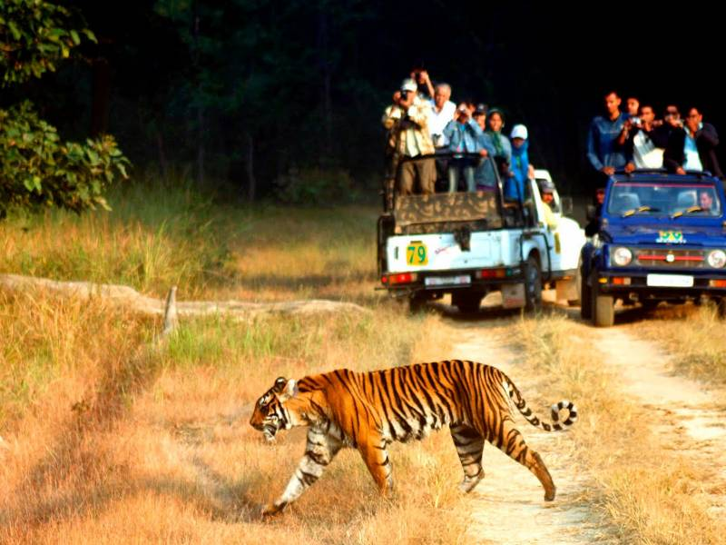 Jim Corbett National Park Tour