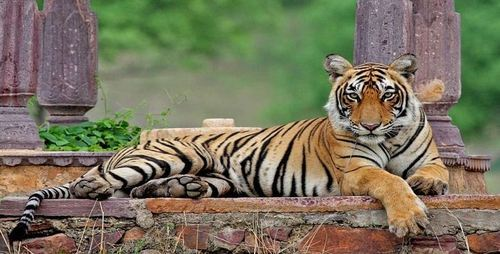 Ranthambore 2 Nights – Ex Jaipur Tour