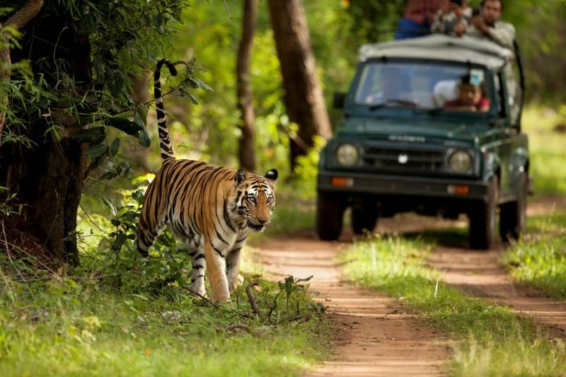Ranthambore Ex Jaipur Tour