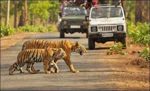 Bilaspur-jungle Safari-temple Tour-crazy-cg-04