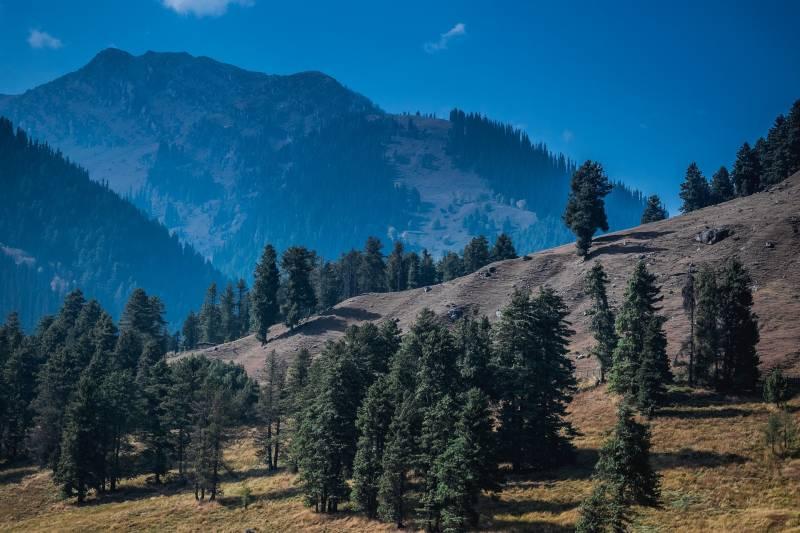 Kashmir Tour 7 Days