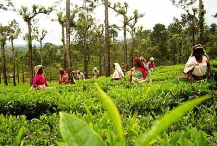 Spice Of Kerala Tour