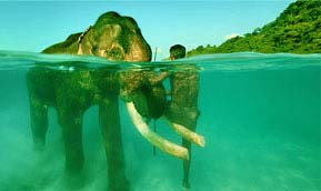 Andaman Packages Tour
