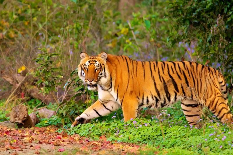 Uttarakhand Tour5D/4N