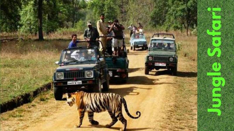 Dooars Jungle Safari Tour