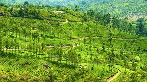 Munnar To Trivandrum Tour