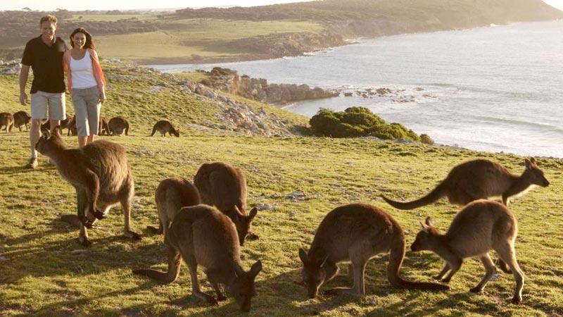 Incredible Australia Tour