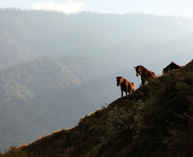 Rodang La Trek (Following The Footstep Of Yeti, In Search Of The Wildman)