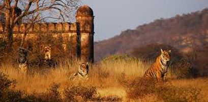 Wild Trail With Golden Triangle Tour