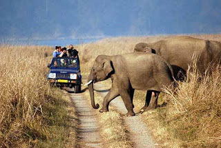 Classic India Wildlife Tour