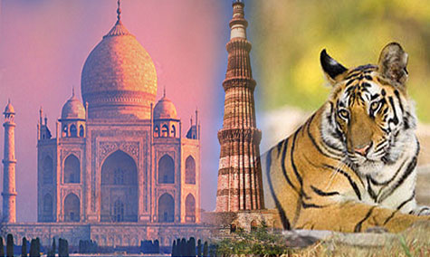 Golden Triangle Trip With Wildlife Package
